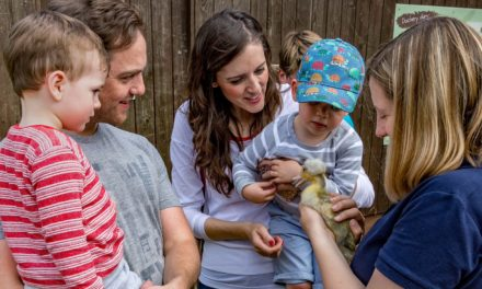 Downy Duckling Days return at WWT Washington Wetland Centre