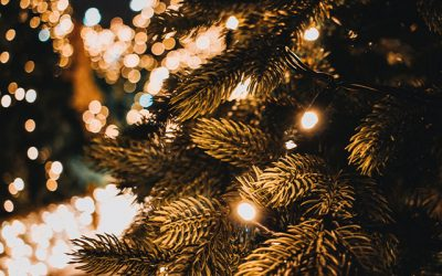 WHERE TO SHOP FOR YOUR REAL CHRISTMAS TREE IN SUNDERLAND