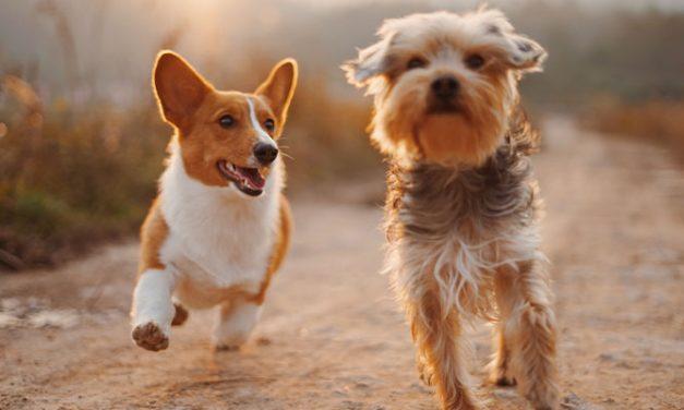 DOG FRIENDLY RESTAURANTS IN SUNDERLAND