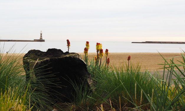5 FREE FAMILY-FRIENDLY ATTRACTIONS IN SUNDERLAND
