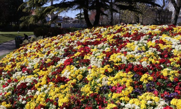 Sunderland Going For Gold at Northumbria In Bloom 2021